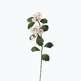 [Paper Eden] Hawthorn (산사나무) 페이퍼 플라워