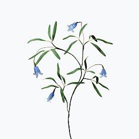 [Paper Eden] Clematis (클레마티스) 페이퍼 플라워