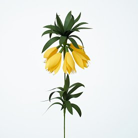 [Paper Eden] Fritillaria (프리틸나리아) 페이퍼 플라워