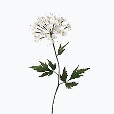 [Paper Eden] Angelica Acutiloba (당귀꽃) 페이퍼 플라워
