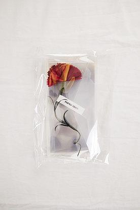 [Paper Eden] Carnation (카네이션) 포스트 플라워