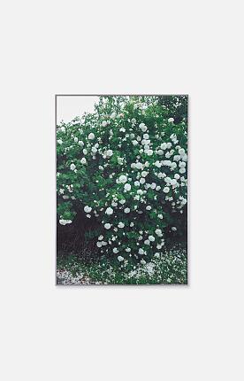 파인리틀데이, ROSE POSTER - white