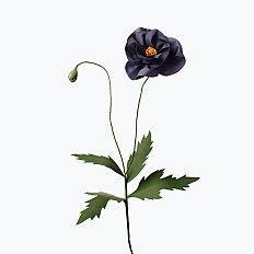 [Paper Eden] Poppy (양귀비) 페이퍼 플라워