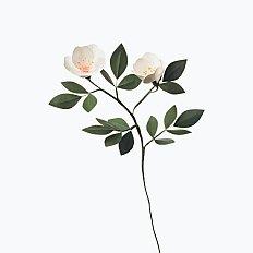 [Paper Eden] Cherokee Rose (체로키 장미) 페이퍼 플라워